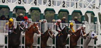 Básico a Saber do Trading nas Corridas de Cavalos!