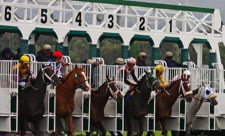Apostas de cavalos online